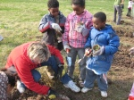 Planting Radishes