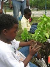 planting 11