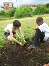 planting 5
