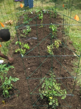 planting 7